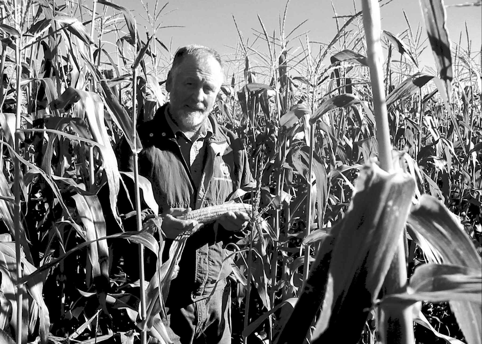 Eric Fridfinnson has 300 acres of corn this year, and he sees it becoming a permanent fixture in their crop rotation.