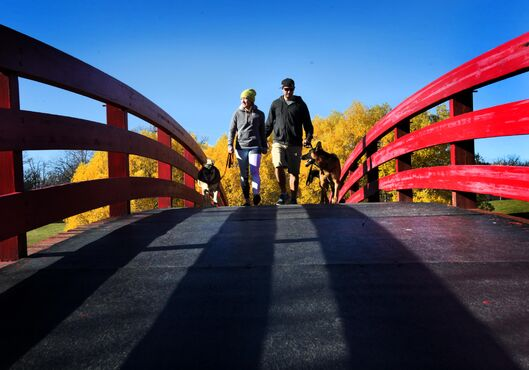 Summer Struve and Jeff Ross walk their dogs Poe (left) and Drake over the bright red bridge at Kings Park as they head to the dogs' park on a beautiful, sunny, October afternoon.   Oct 25,  2014 Ruth Bonneville / Winnipeg Free Press