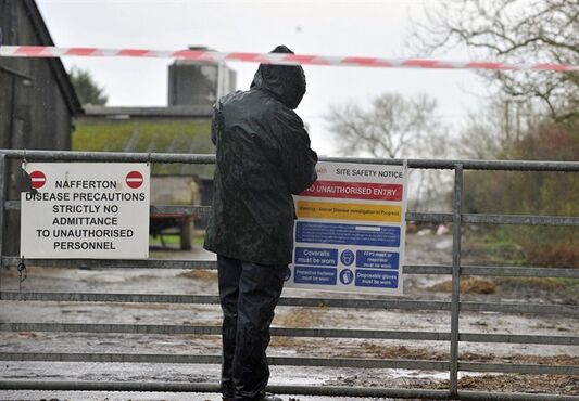 Officials place signs to restrict entry at a duck farm in Nafferton, England, where measures to prevent the spread of bird flu are under way after the first serious case of the disease in the UK for six-years, Monday Nov. 17, 2014. Farmers around the country have been warned to be on alert after at least one case of the H5 bird flu virus was confirmed at this duck breeding farm, but officials insisted Monday that the risk to public health is very low. (AP Photo / Steve Parkin, PA) UNITED KINGDOM OUT - NO SALES - NO ARCHIVES