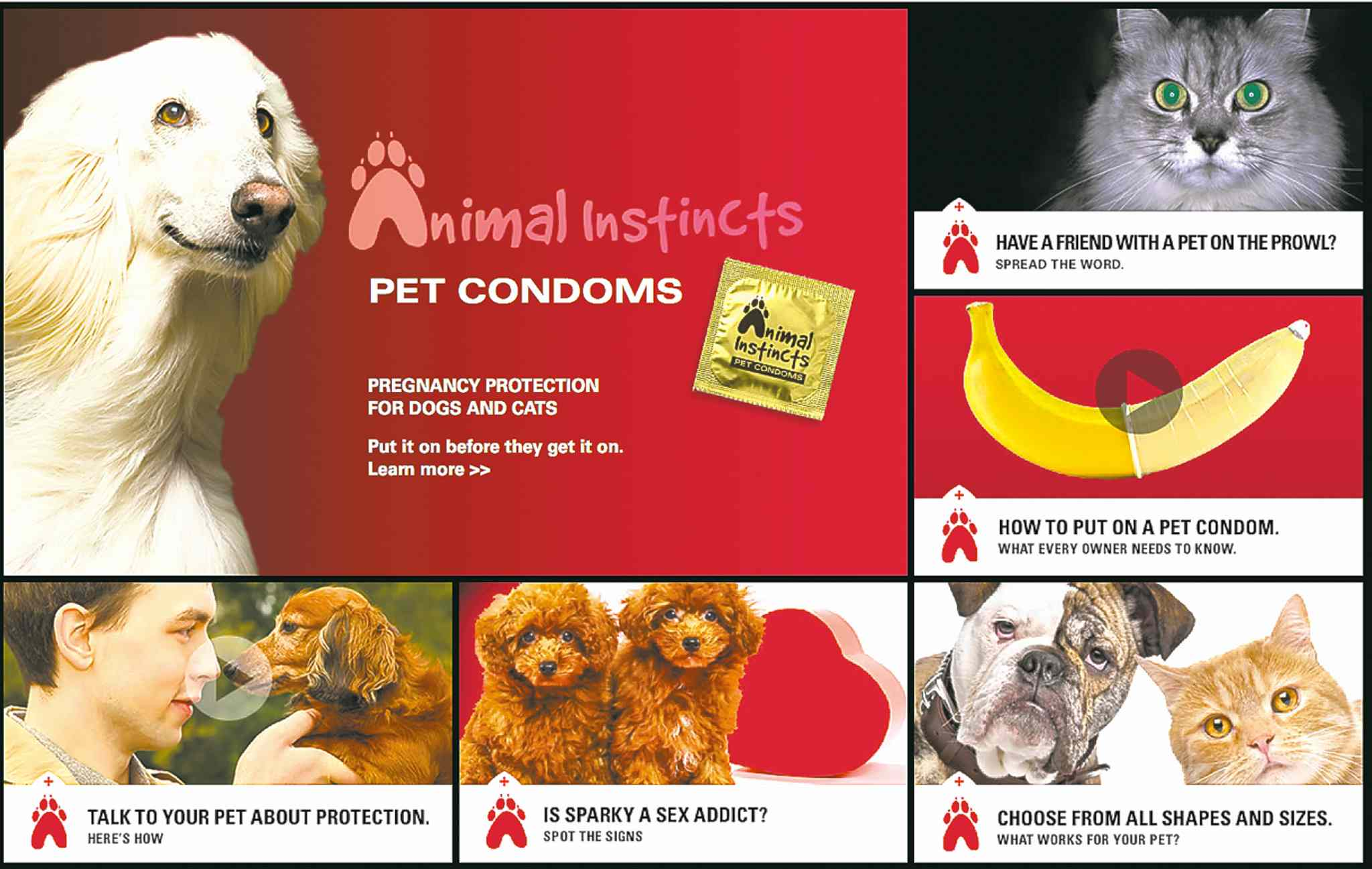 The San Francisco SPCA devised a fake 'Pet Condoms' ad campaign to talk about the importance of spaying and neutering pets.