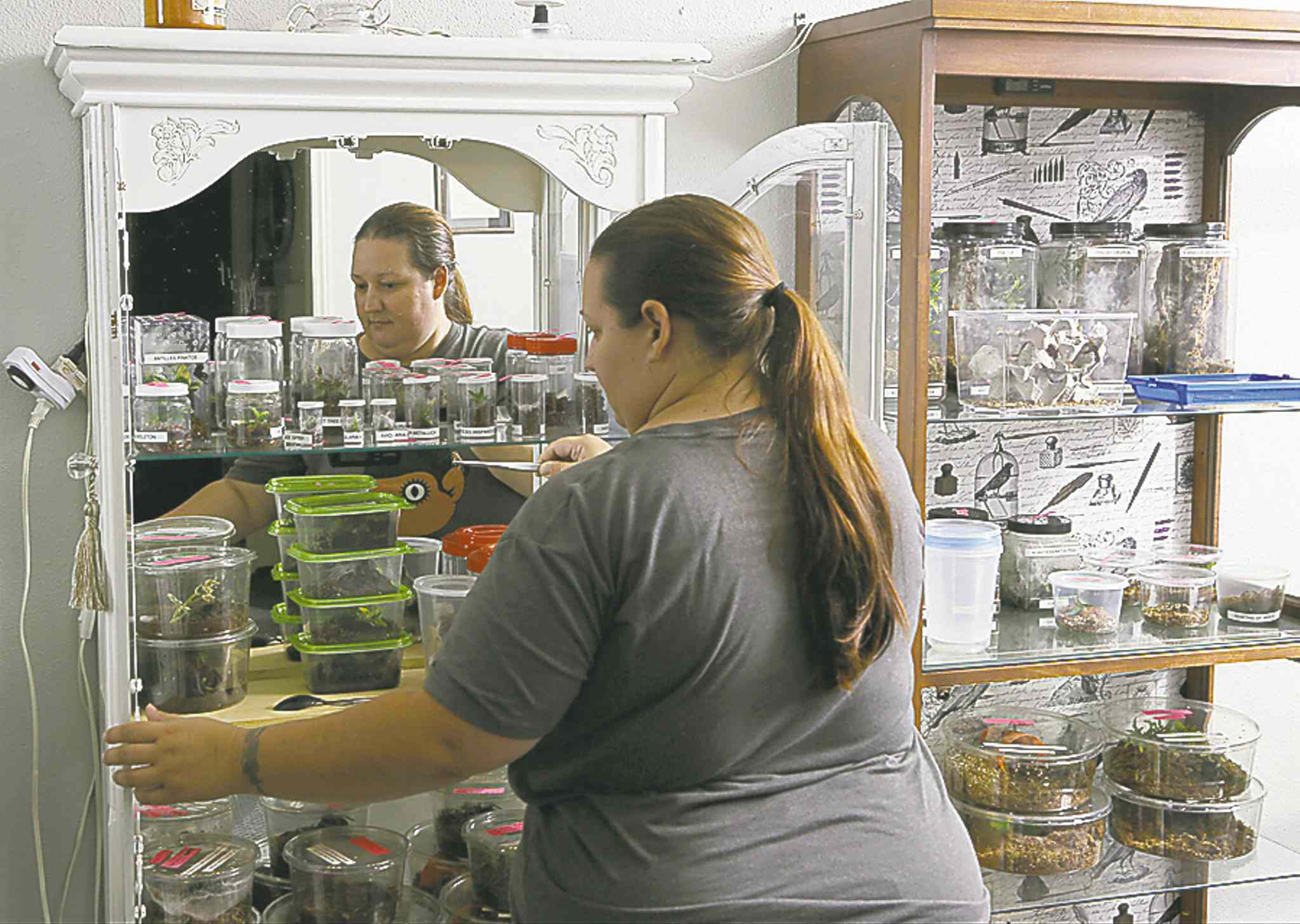 AP Photo/Damian DovarganesNurse Dee Reynolds shows off her collection of tarantulas, housed in individual containers.