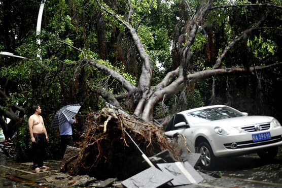 Residents look at a tree that fell on a car in the aftermath of Typhoon Matmo in the city of Fuzhou in southeast China's Fujian province Wednesday, July 23, 2014. Typhoon Matmo churned ashore in southeastern China on Wednesday and was downgraded to a tropical storm, while the death toll from last week's more powerful Typhoon Rammasun rose further. (AP Photo) CHINA OUT