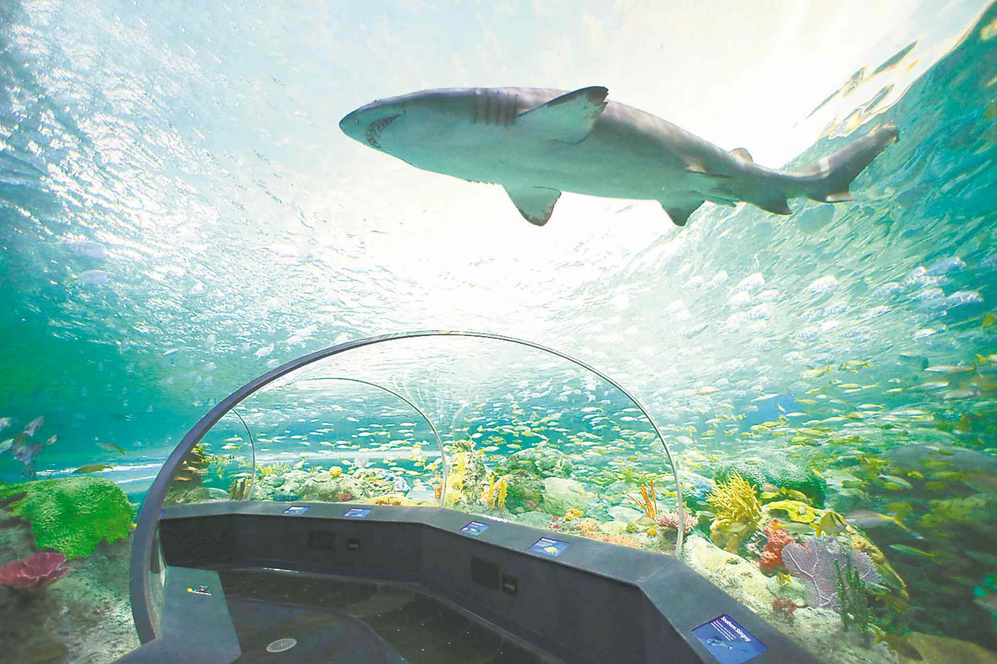 The newly opened Ripley's Aquarium in Toronto is Canada's largest indoor aquarium.