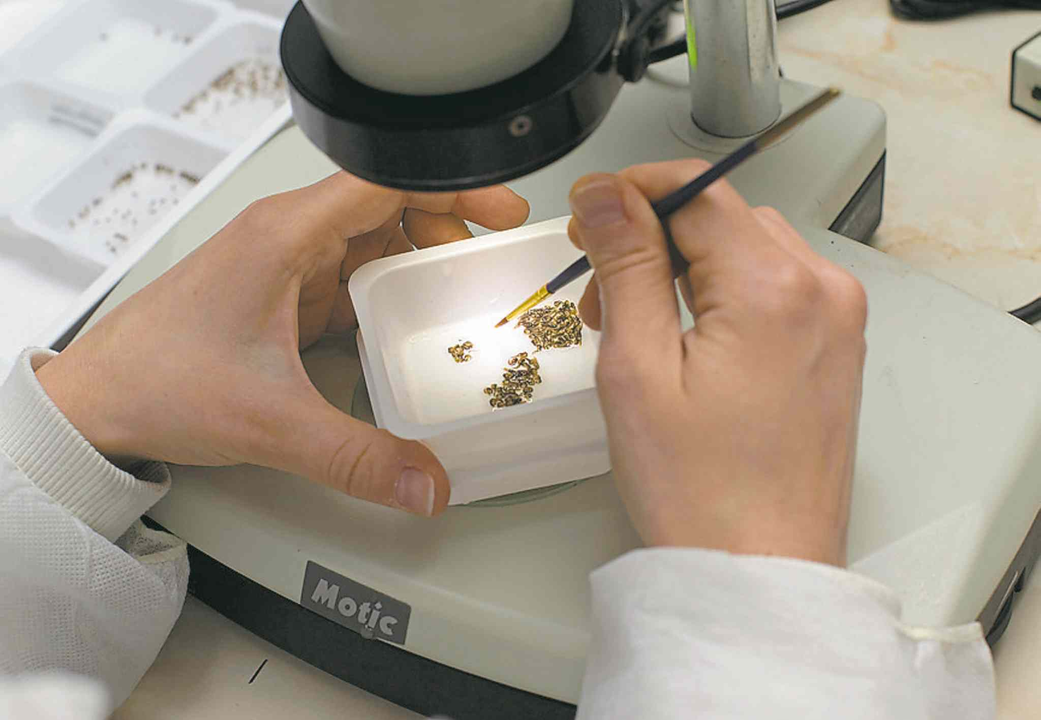 A scientist works on insects in a laboratory at the Oxitec headquarters in Abingdon, England, in 2012. More than 50 million people are infected with dengue annually, the World Health Organization says.