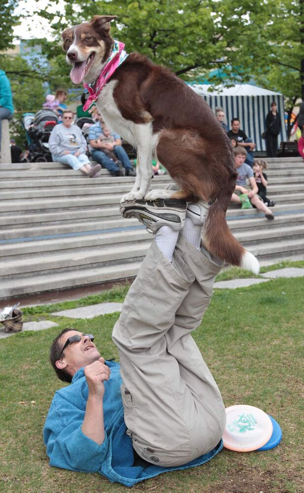Riding High- Steve Diamond of The Diamond Disc Dogs shows off  his border collie's skills at the Forks. June 5 2010 (JOE BRYKSA / WINNIPEG FREE PRESS)
