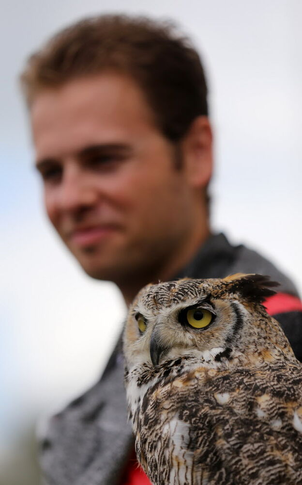 Stewart Robertson from Wildlife Haven, and Max, a great horned owl, take in the festival. (Trevor Hagan / Winnipeg Free Press)