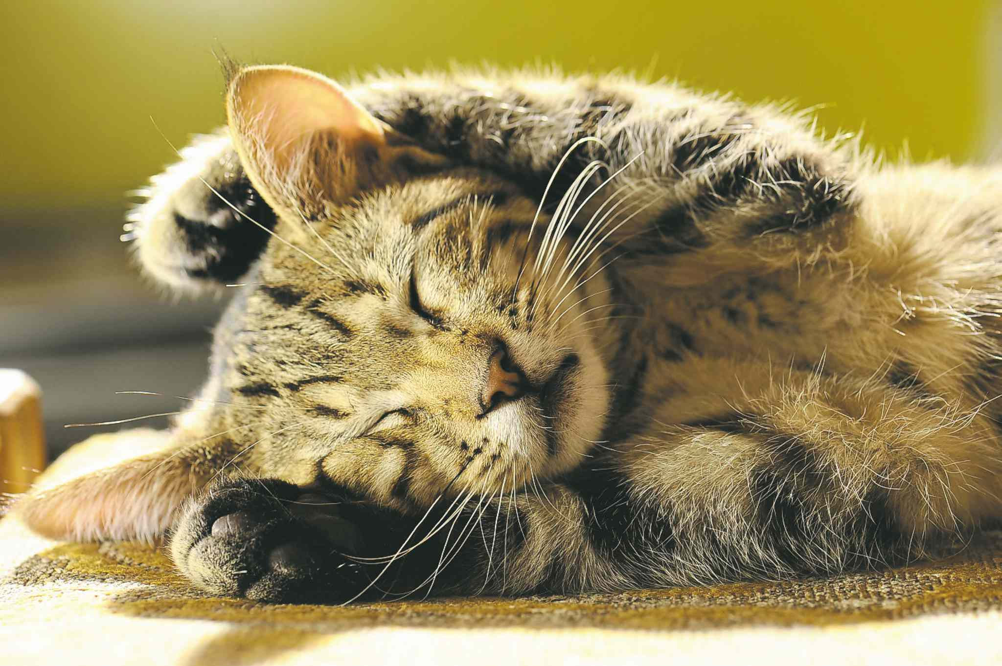 Cats are the most popular pet all over the world, including Canada.