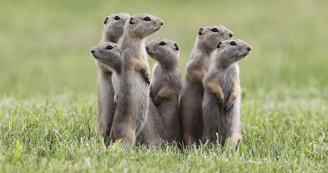 No further pest control treatments against Richardson ground squirrels are planned in Winnipeg parks, the city said Tuesday.