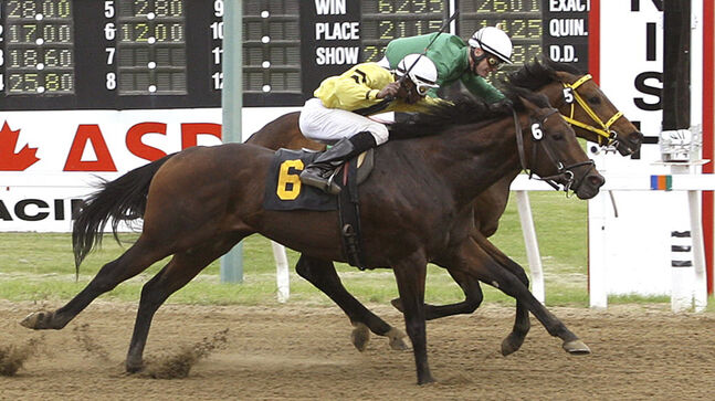 Balooga Bull (5) wins The Free Press Stakes in a photo finish Sunday afternoon at Assiniboia Downs.