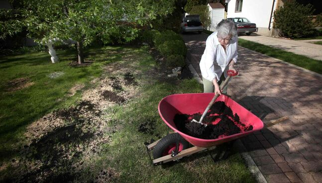 Barb Jenkins spreads fresh topsoil on winterkill in her St. James yard Wednesday. It was a tough winter for both people and lawns.