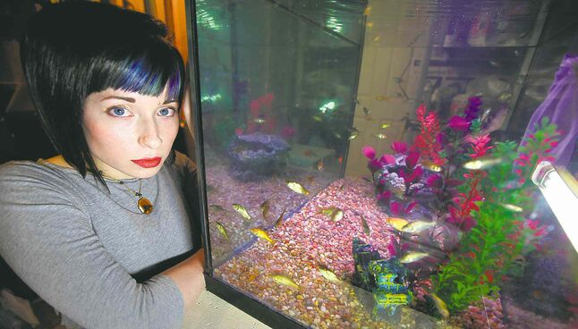Erin Cornelius sits next to her fish tank in her home with 99 of the 400 goldfish she rescued from the outdoor pond at the downtown library.