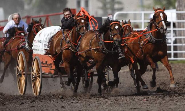 Clint Desjardins competes in the eighth heat of the pony chuck wagon races at the Manitoba Stampede and Exhibition as it celebrates its 50th year this weekend.