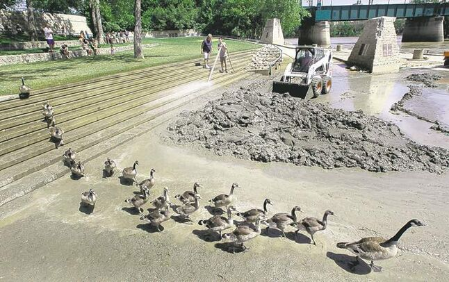Canada geese march past a crew cleaning sediment from steps   and the Assiniboine Riverwalk at The Forks on Monday.