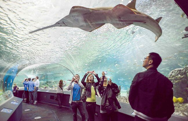 Visitors get up close to sharks and other aquatic animals in the underwater viewing tunnel at Ripley's Aquarium of Canada.