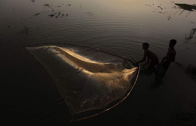 Indian fishermen throw their fishing net in floodwaters in a paddy field in Pobitora village about 55 kilometres  east of Gauhati, India, Friday, June 8, 2012. Incessant rainfall in catchment areas during the last week have led to a rise in the water level of the Brahmaputra and its tributaries, inundating vast tracts of farmlands and villages in several districts of both Upper and Lower Assam, according to news reports.