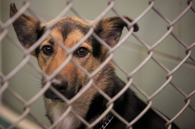 Many dog-rescue shelters help potential adopters find the right pet.