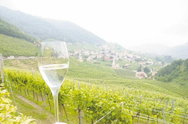 Prosecco is made from grapes grown on the steep slopes near Valdobbiadene in the Italian province of Treviso.