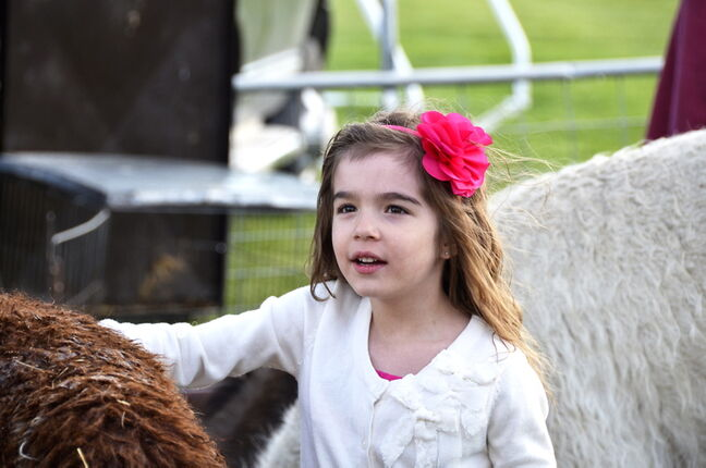 A young visitor enjoys the petting zoo.