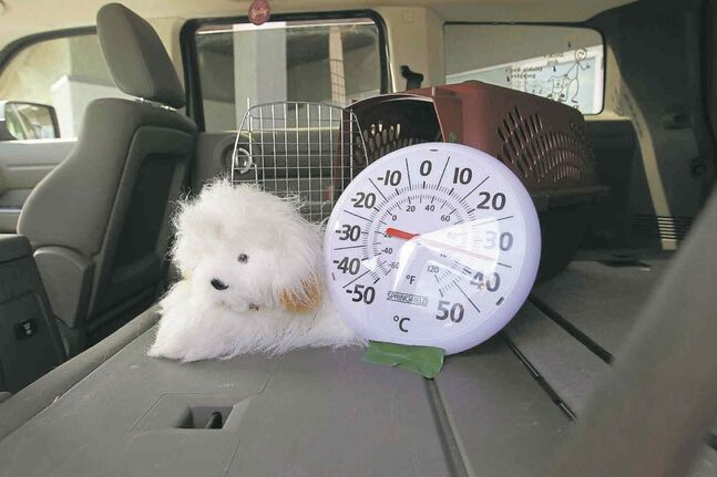 A stuffed dog named Blaze was the guinea pig for a Hot Car Awareness Day demonstration showing how quickly a car's interior can heat up in summer.