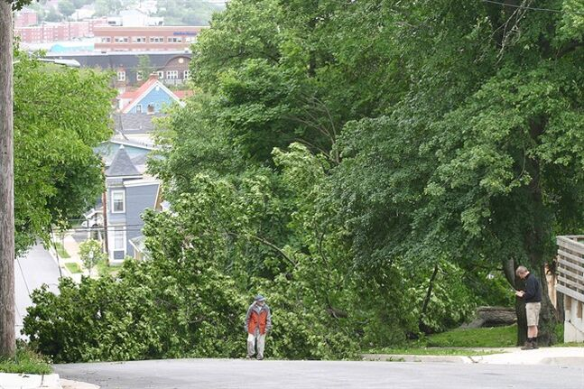 Dartmouth, N.S. residents examine a tree that has toppled onto power lines by tropical storm Arthur on Saturday July 5, 2014. THE CANADIAN PRESS/Catherine Tutton
