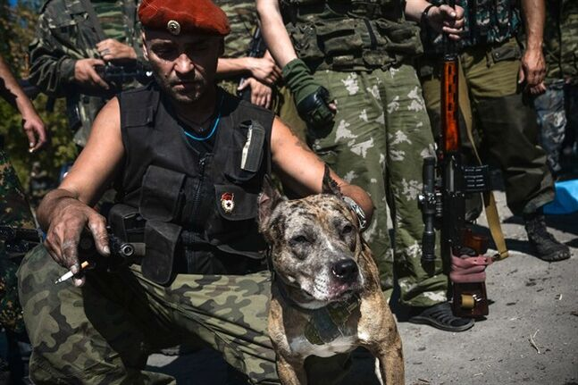 A Pro-Russian rebel holds a dog named Devka with hand grenade attached to the leash in Donetsk, eastern Ukraine, Wednesday, Sept. 3, 2014. A day ahead of a NATO summit, Russian President Vladimir Putin issued his own peace plan for eastern Ukraine, calling on the Russian-backed insurgents there to