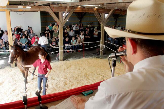 Gold N Sochi fetches $9,000 at yearling auction.