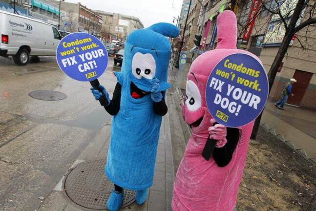 Two animal-rights activists dressed as giant condoms handed out leaflets promoting animal birth control at a busy downtown intersection Friday.  The group hoped to encourage pet owners to their dogs and cats spayed or neutered.