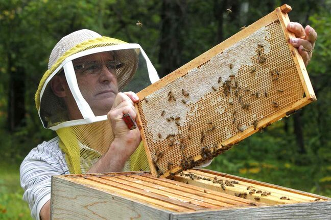 Bee keeper Jim Campbell keeps bees near Stonewall, Manitoba. A new report states nearly one quarter of Manitoba's honey-bee colonies didn't survive last winter, but an industry official says that's still a big improvement from a year earlier.