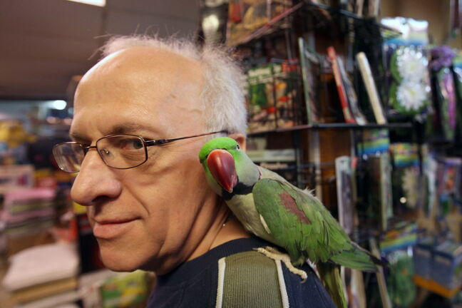 Henry Wasserman owner of Bird Shop & Aquariums 1034 Main St with his Alexandrine Parrot name Phat.