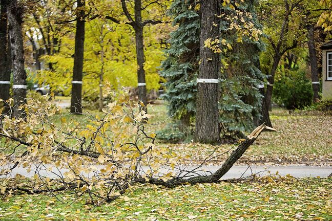 Cleanup of the city's broken trees could extend into 2020, the city said.