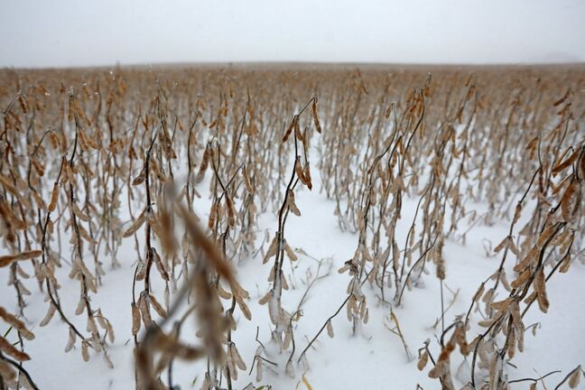 Farmers eager to prepare unharvested fields for the new growing season will have to wait until the snow clears and the weather warms enough to operate machinery, narrowing the already short window for seeding new crops.