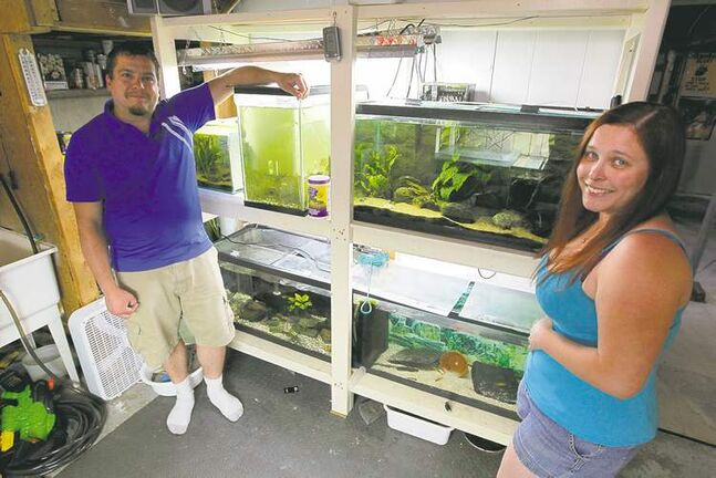 Jason and Monica Lesage with some of their fish tanks.