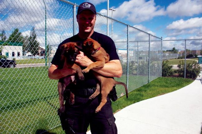 Sgt. Dave Bessason holds two pups outside the Winnipeg Police Service's new Canine Unit facility in Transcona.