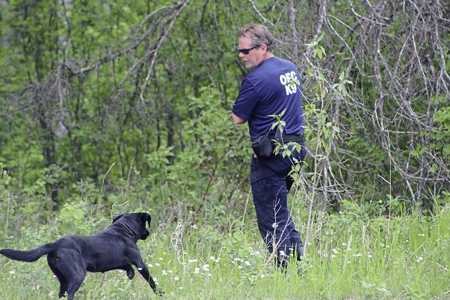 An Office of the Fire Commissioner K-9 unit searches for Eduardo Balaquit southeast of the rural town of Arborg on Thursday. Balaquit, 59, has been missing since June 4. June 14, 2018.