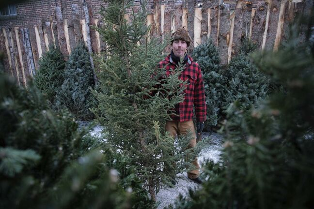 photos by Daniel Crump / Winnipeg Free Press</p><p>Peter Scott has been selling Christmas trees at his pop-op tree lot in Wolseley for three years. Before that, he sold Christmas trees in New York City for six years.</p></p>