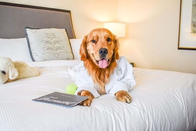 @candysandy_macandsully</p><p>A luxury stay for both you and your pet awaits at Fairmont Winnipeg. </p>