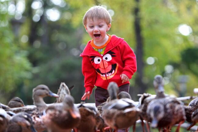 Twenty month old Ryder Buors exudes excitement  as ducks surround him along the creek at Kildonan Park Tuesday while attending park with family. Oct   08, 2013 Ruth Bonneville / Winnipeg Free Press