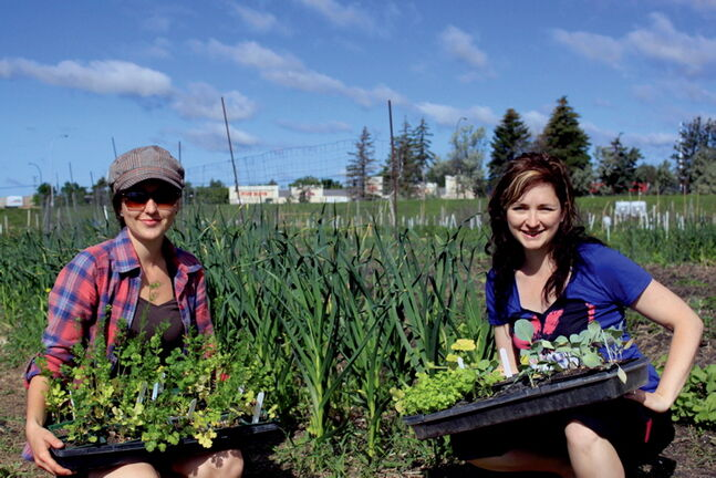 Angela Tucker, left, University of Manitoba Student Garden coordinator, and Tammy Junghans, garden programmer, in the UMSU garden where the community is encouraged to come and use the produce. They are still looking for donations to install picnic tables in the garden so new immigrant families can come and meet each other.