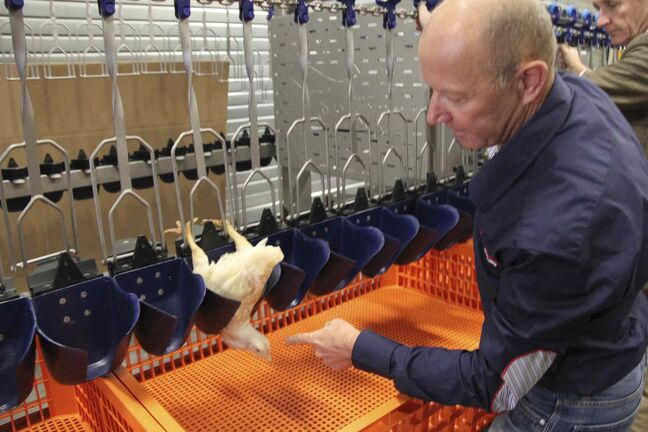 Wim Van  Stuyvenberg, a slaughterhouse  systems designer with TopKip B.V.  in Liendon,  Netherlands, demonstrates  a new system for  handling poultry.