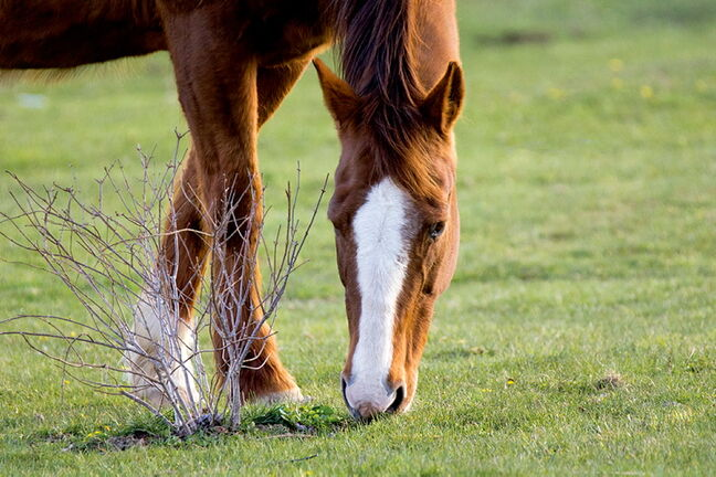 It's important to know what to do and what to look for when your horse shows signs of distress.