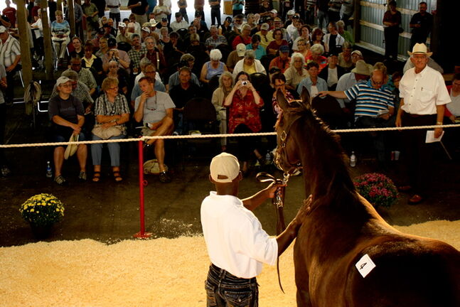 Try to win a prize by predicting the top selling price for yearlings being sold at the annual horse auction Sun., Aug. 25 behind the grandstand at Assiniboia Downs.