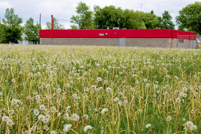 North End residents say dandelions have choked out families and children from using Boyd Park since spring.