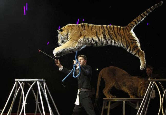 A tiger leaps over its handler at the Super Spring Break Circus at the MTS Centre in March.