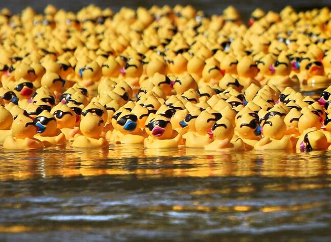 Organizers of the Great Manitoba Duck Race warned Sunday members of the public shouldn't try to retrieve wayward ducks.