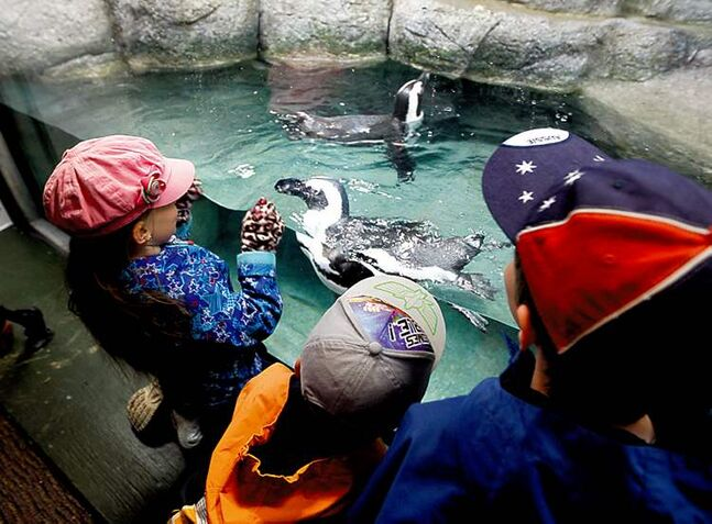 Siobhan Stewart, Owen Boychuk and Titus Stewart watch penguins at the zoo.