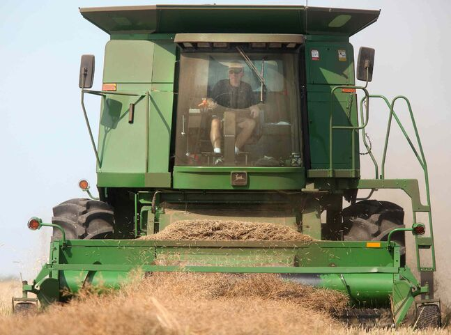 Alan Kirk manouvers his combine across a field of canola near Sanford.