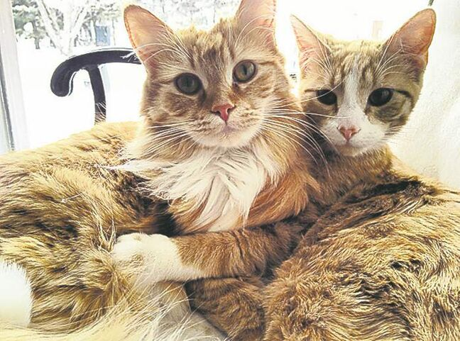 These two are the best of friends. They are both rescue cats and are living happily ever after in their forever home.  -- Andrea Northwood, Winnipeg