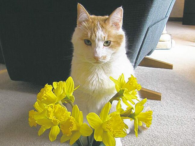 Stanley loves to celebrate spring with a bouquet of daffodils. — Heather Moore, Winnipeg