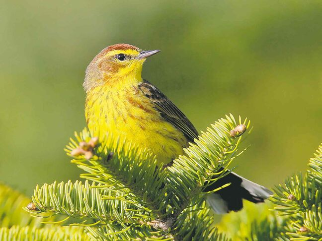 Jeff Nadler 