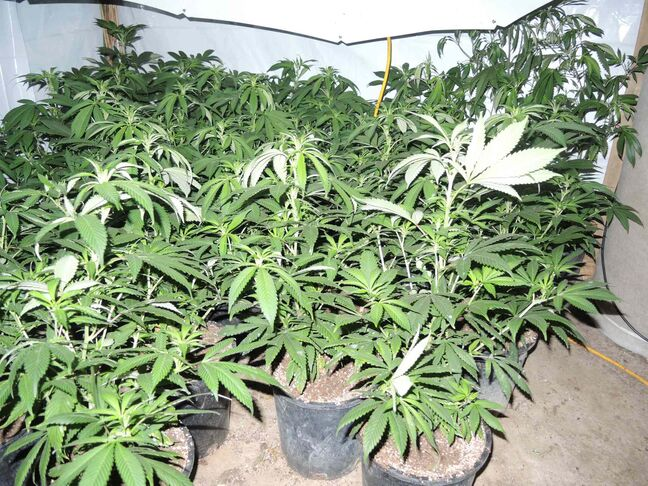 RCMP seized about 300 plants, lighting and venting equipment.